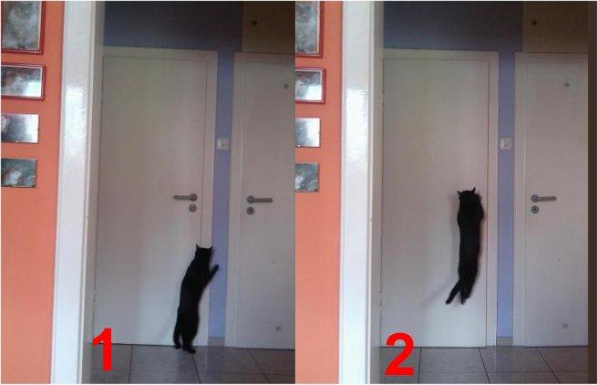 Kater öffnet Türe