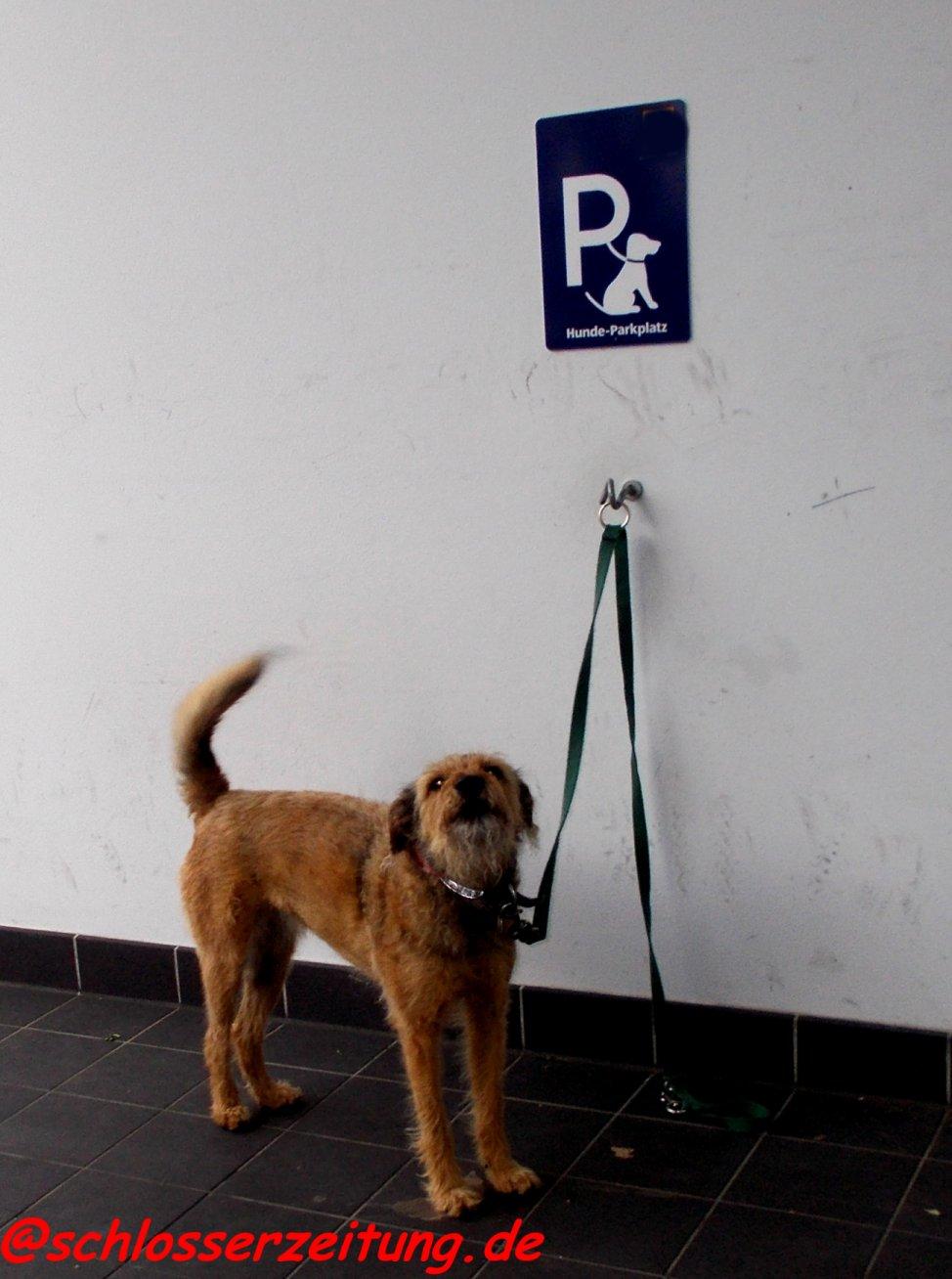 Alleingelassener Hund vor einem Einkaufzentrum. Das muss nicht sein. Eine Sicherheitsbox verhindert dieses Risiko