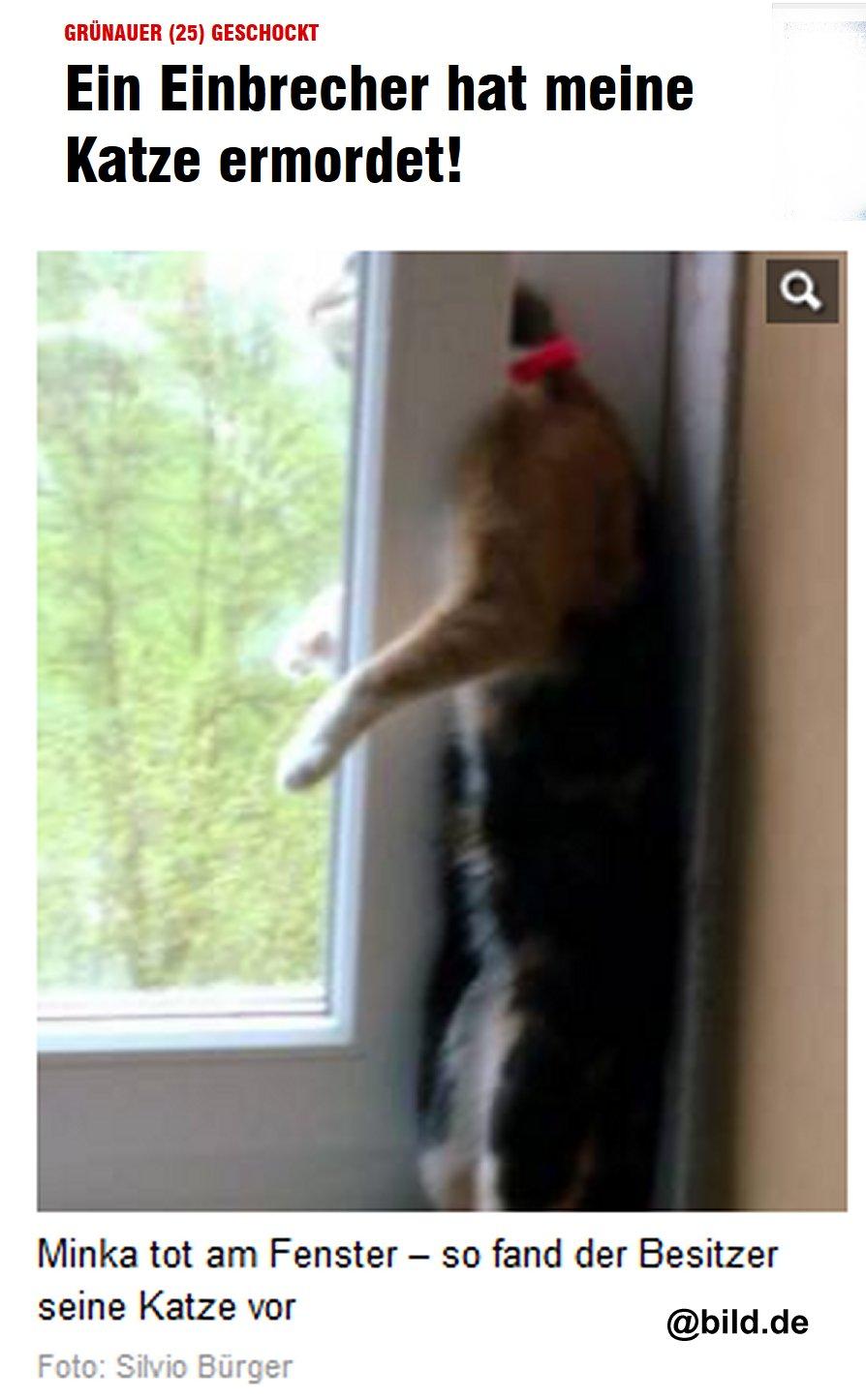 Einbrecher tötet Katze
