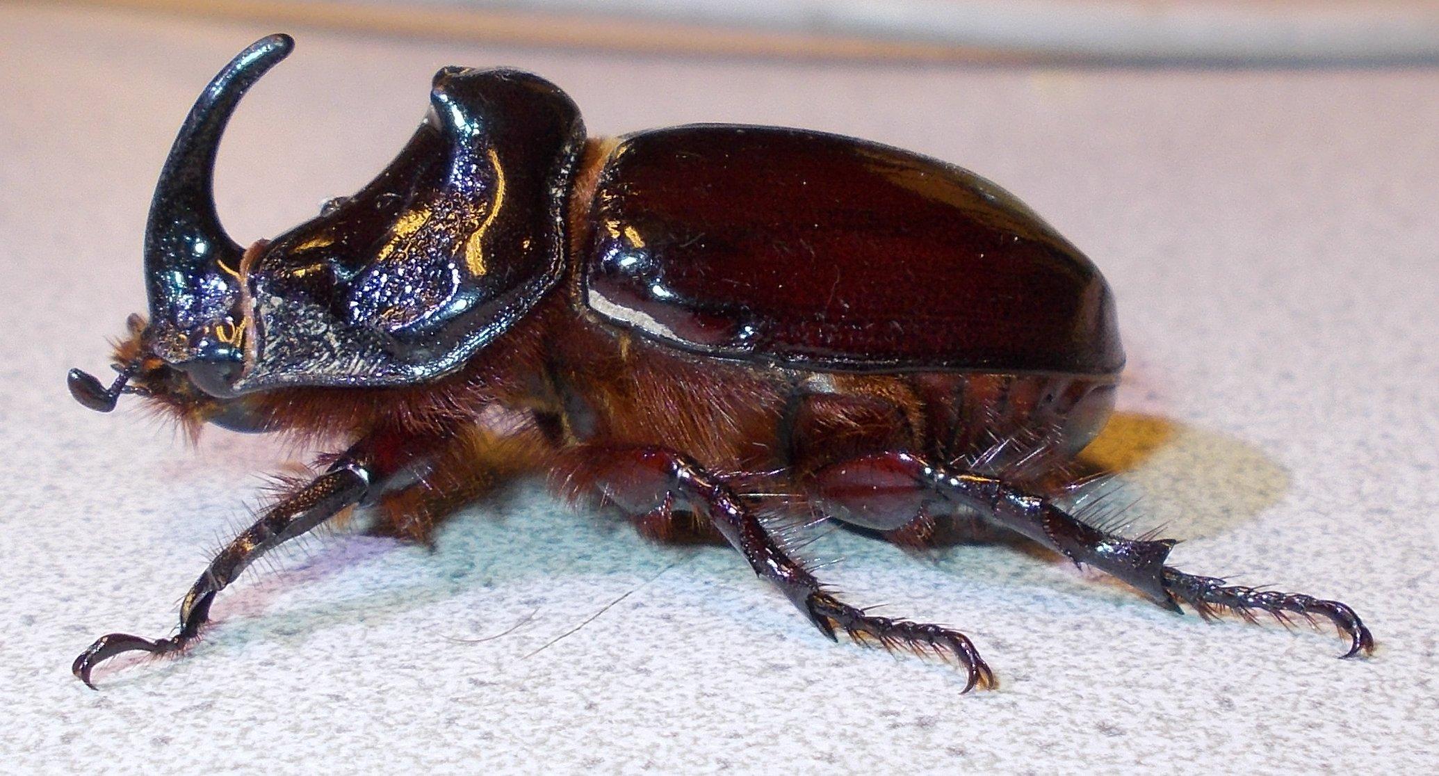 Viele Millionen Jahre lebt dieses Tier auf unserer Erde Bitte helft mit, dass weiterleben darf und nicht austirbt