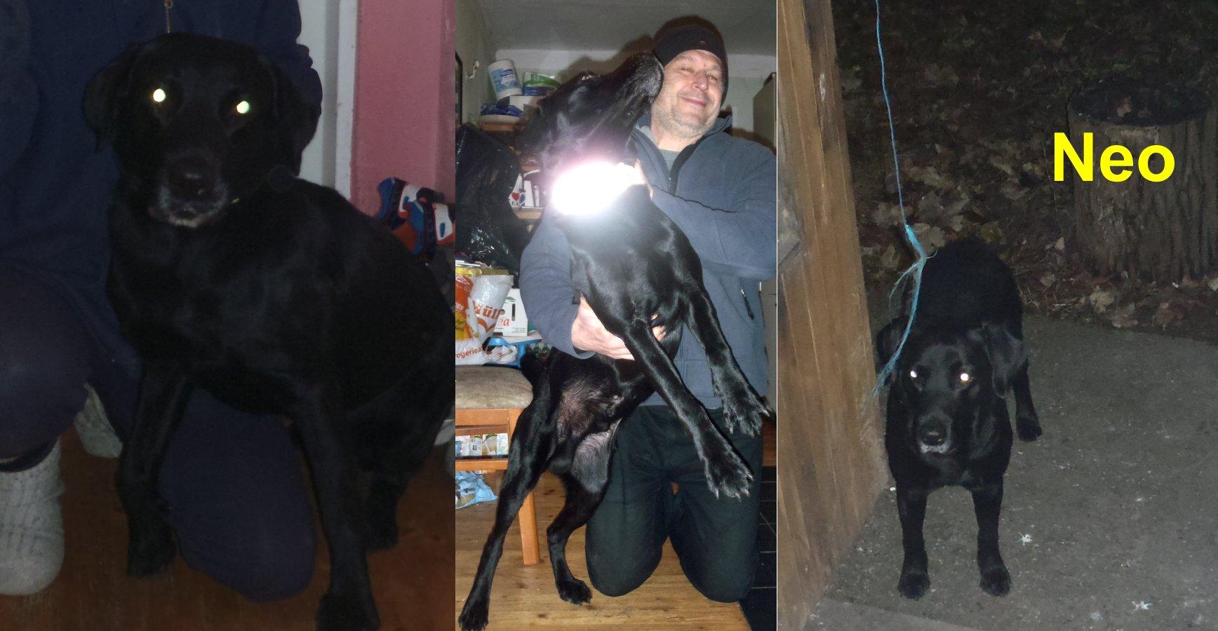 Mitten in der Nacht stand plötzlich ein riesiger schwarzer Hund vor mir Gerettet - versorgt - vermittelt: An einem Tag